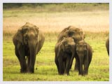Dhikala Wildlife Sanctuary